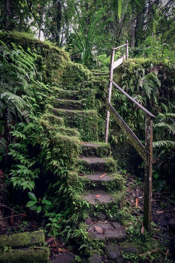Old stone stairs in overgrown forest garden royalty free stock photo