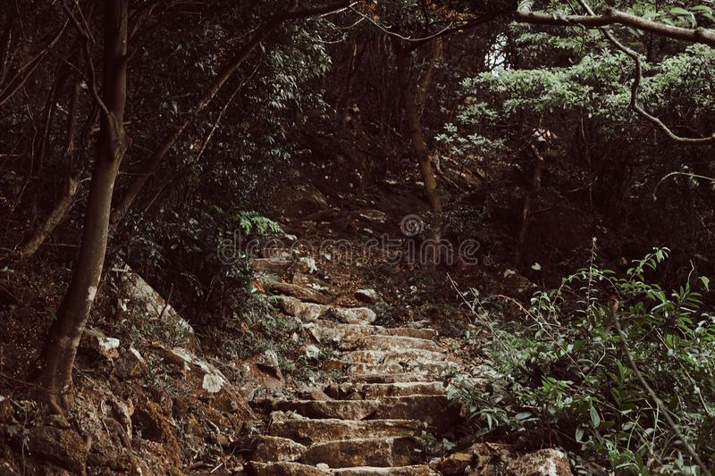 Stone stairs up to the hill in the dark green forest. stock image