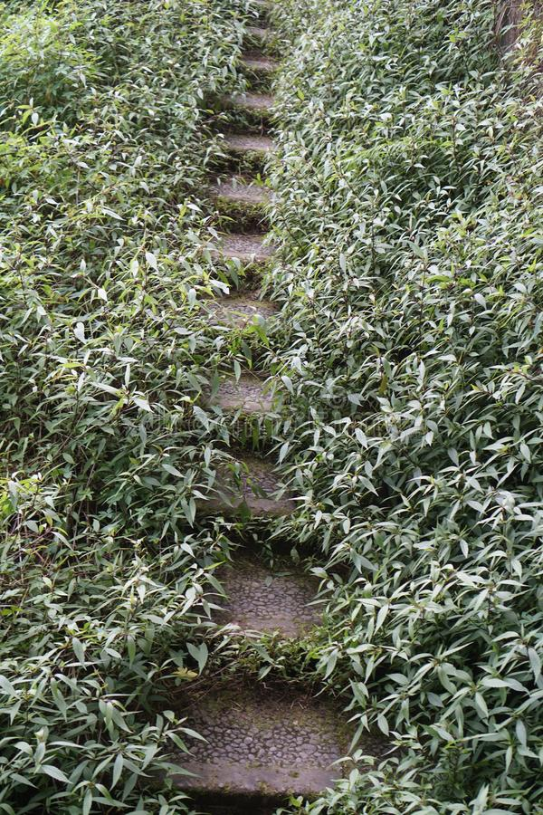 Stairs overgrown with grass royalty free stock images
