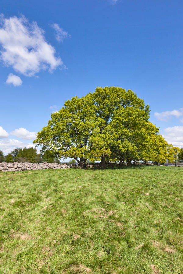 Download Old stone wall stock image. Image of plant, landscapes - 16406171
