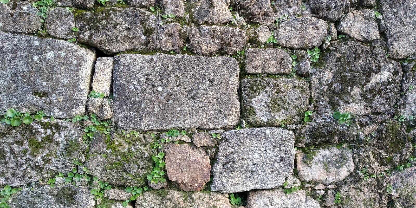 Old Stone Wall of House Texture. Stone Wall Texture with Fungi. Grey. Parede de Pedra royalty free stock images