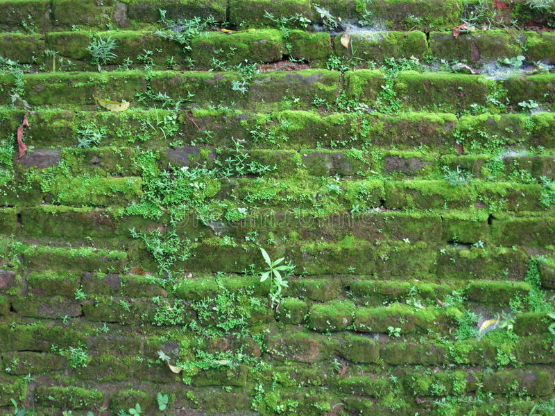 Old stone wall in Srilanka. Old stone fwall in Srilanka covered with moss stock photography