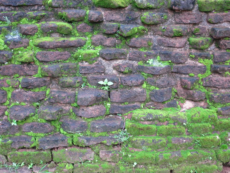 Old stone wall in Srilanka. Old stone fwall in Srilanka covered with moss stock photos