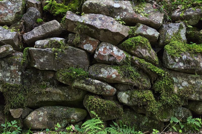 Old stones with moss and green plants between them. Beautiful nature background with stone texture royalty free stock photo