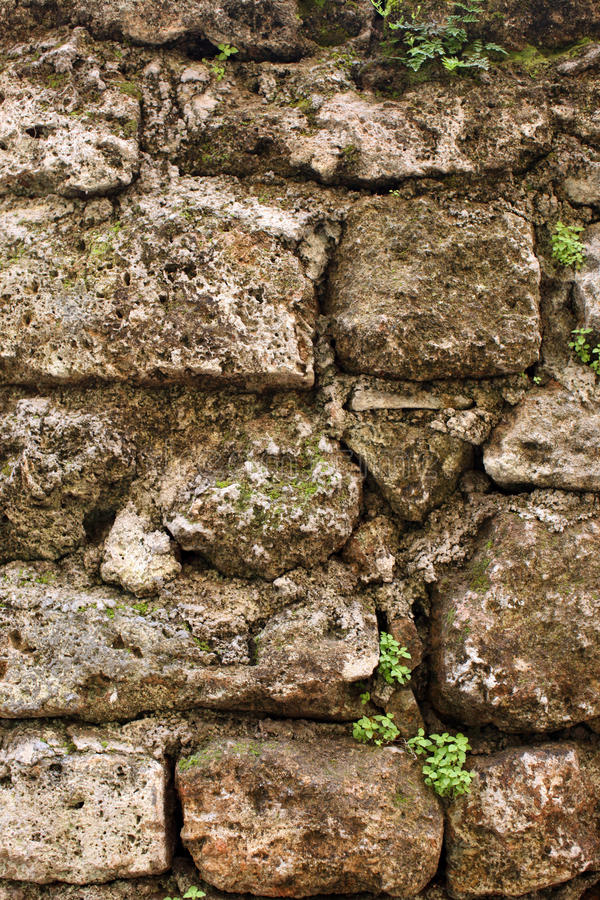 Free Old Stonewall With Plants Stock Photos - 13150153