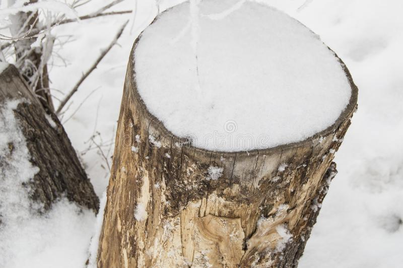 Old stump of a felled tree covered with snow, winter forest, top view stock photo
