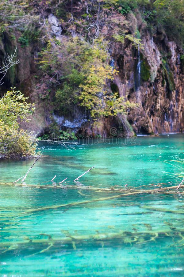 Old sunken trees in a crystal clear lake. Plitvice lakes.  royalty free stock image