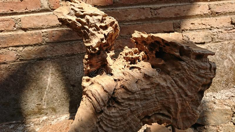 Old teak wood corrosion texture, brick wall background royalty free stock photography