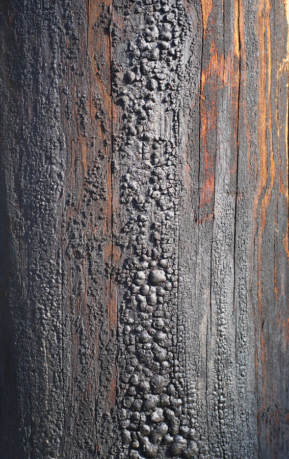 Old telegraph post column texture close-up.  royalty free stock photography
