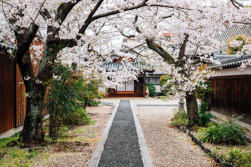 Old temple with cherry blossoms at Japanese old town Imaicho in Nara, Japan stock image