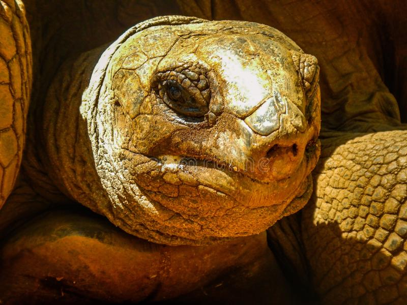 Old tired tortoise face royalty free stock photography