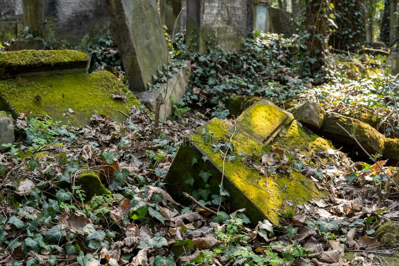 Old tombstones covered with moss. Old jewish tombstones covered with moss on graveyard in the city of Czestochowa in Poland, cemetery, historic, religion royalty free stock images