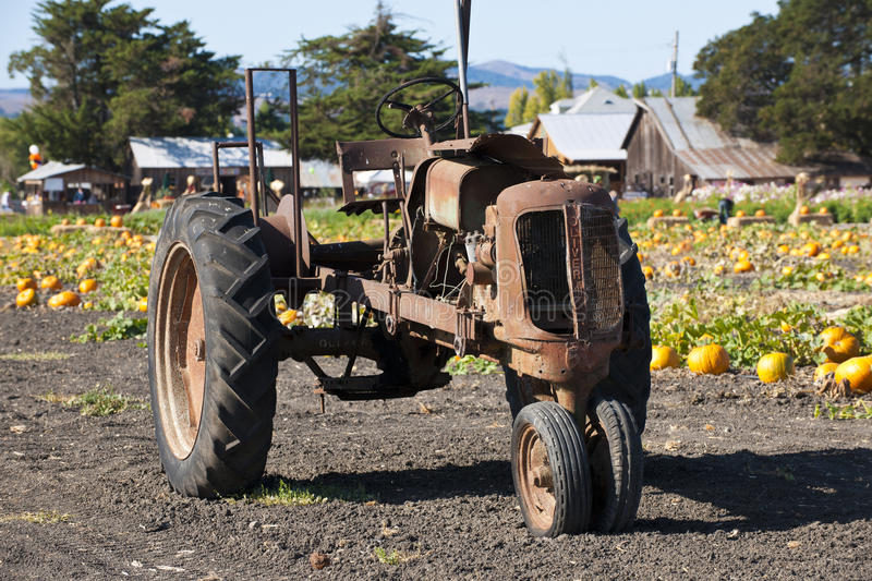 Old tractor in front of a pumpking field, California, USA stock images