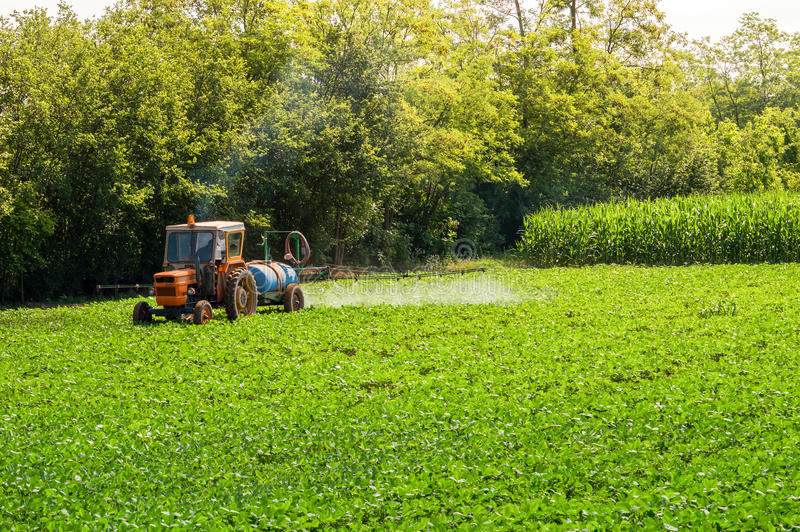 Old tractor spraying pesticides on soy bean. Farmer spraying soybean field with pesticides and herbicides stock photos
