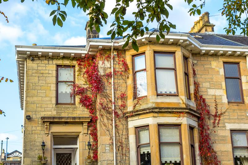 Old, traditional British house with red ivy stock photography