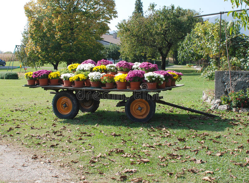 Old Trailer with Flower Pots. An old wooden trailer covered with plastic pots of brightly coloured flowers royalty free stock photography