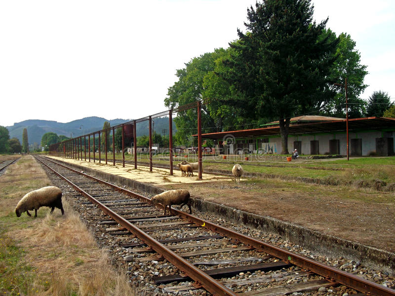 Old train station with sheeps in the south of Chile royalty free stock photography