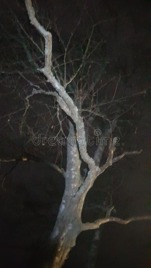 Free Old Tree Royalty Free Stock Photos - 103154388