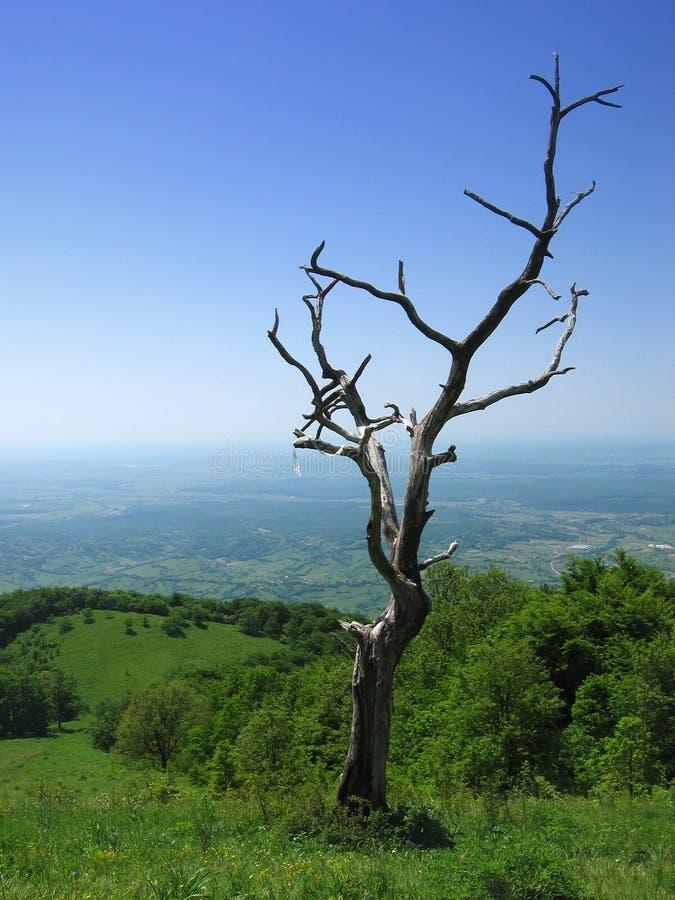 Download Old tree stock image. Image of forest, branch, landscape - 167891