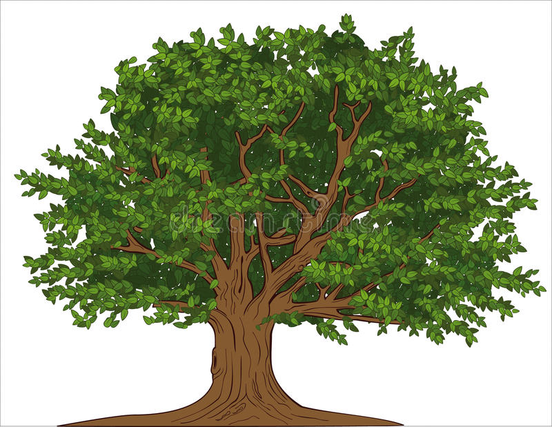 Old tree. Vector drawing of old big tree with branches and crown