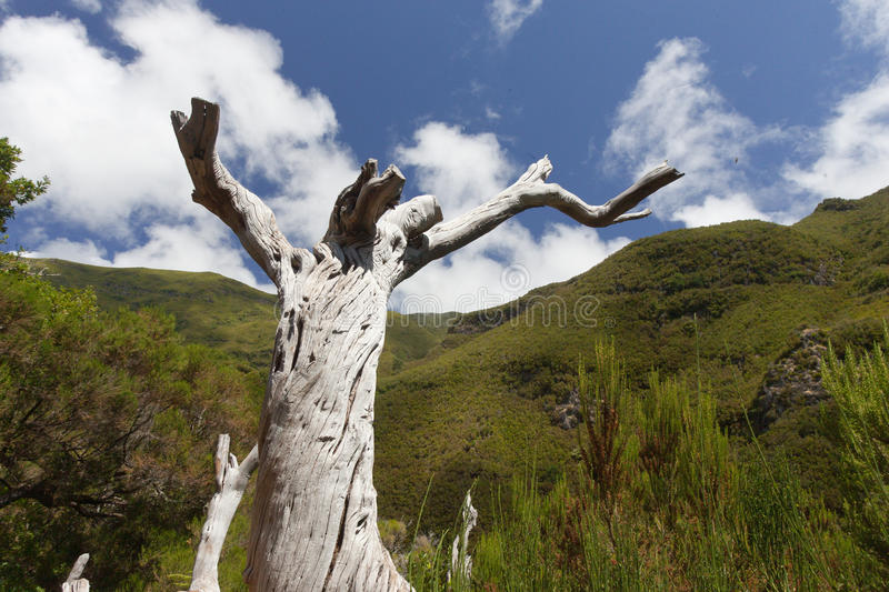 Download Old Tree Stock Photography - Image: 18010142