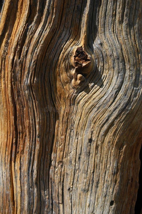 Download Old Tree stock image. Image of background, lumber, bark - 759441