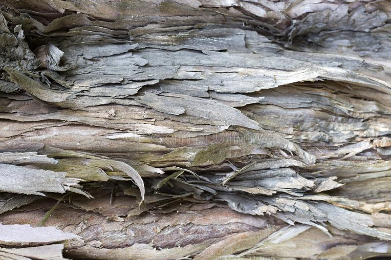 Old tree bark with cracks closeup, texture, background stock photos