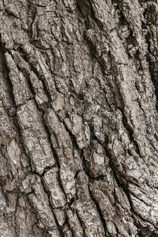 Old tree bark. For natural textured background stock photos