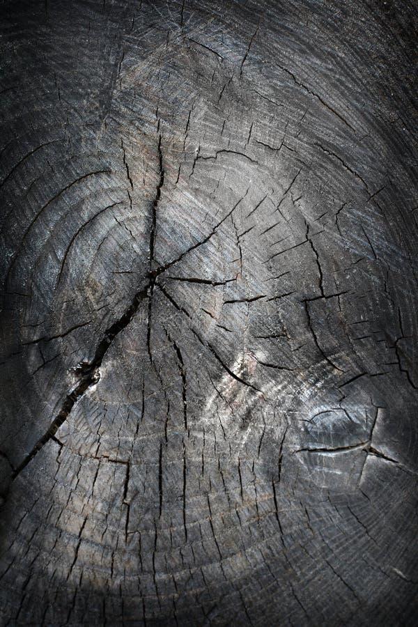 Old tree cut texture stock photo