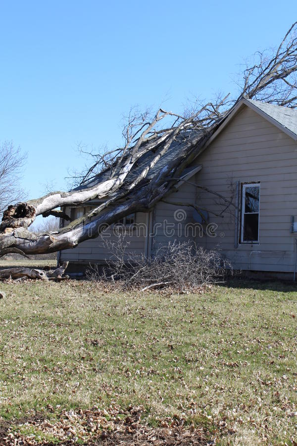 Free Old Tree Fell On A House Royalty Free Stock Photos - 54286788