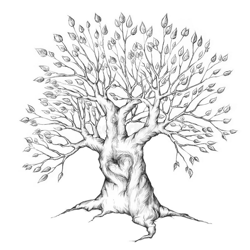 Old Tree with heart vector illustration