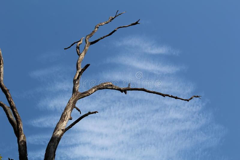 An old tree royalty free stock images