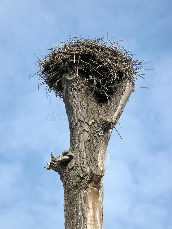 Download Old Tree, Nest, White Clouds, Sky, Nature, Stock Photography - Image: 13845072