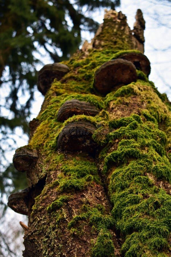 Moos und Pilze an einem Baum royalty free stock photo