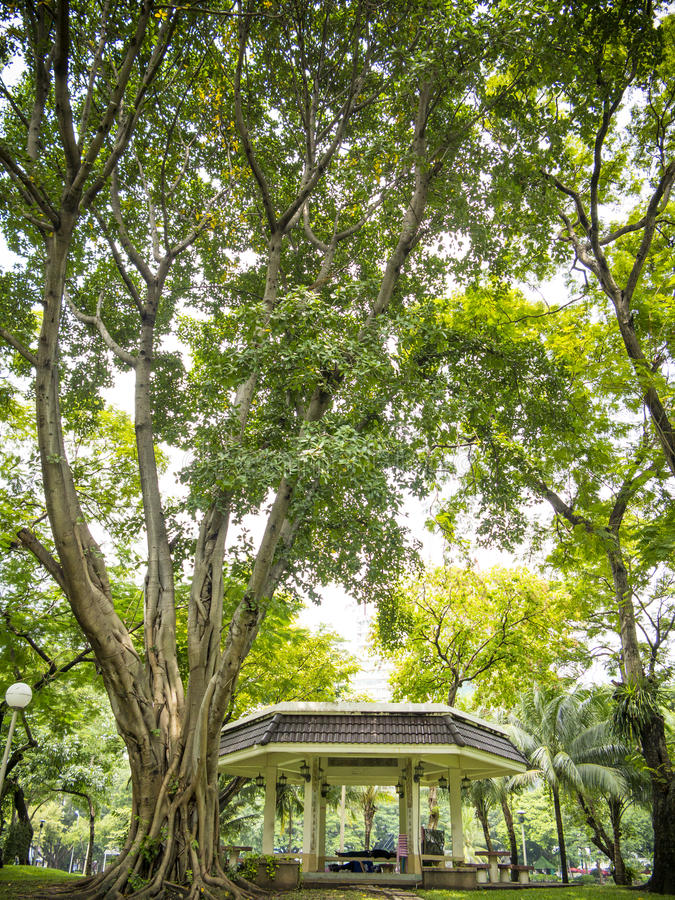 Download Old tree pavilion stock photo. Image of tree, leaves - 28924308