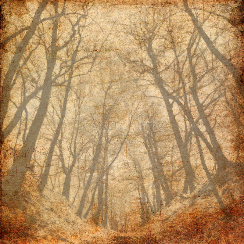 Download Old Tree Photo Royalty Free Stock Image - Image: 4958126