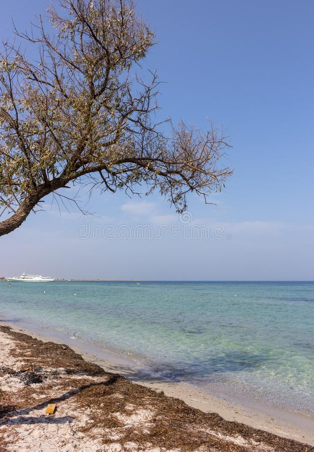 Old tree on seaside against white boat on sunny day. Tropical paradise concept. Sand beach with seaweed and tree. Old tree on seaside against white boat on stock image