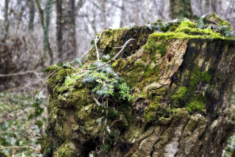 Green tree stump full of vegetation stock photos