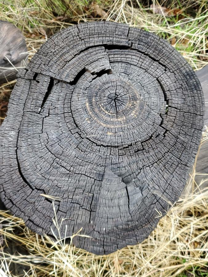 Old tree stump with spiral royalty free stock images