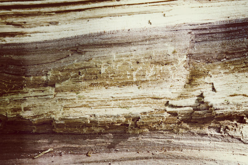 Old tree texture sepia background grunge toned stock photography