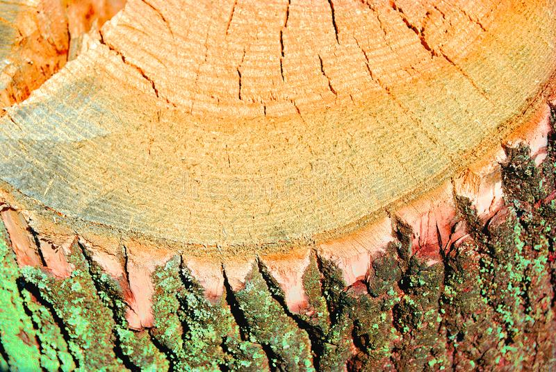 Old tree trunk texture, sawed section top view, close up. Detail stock photography
