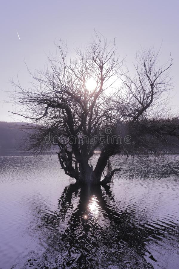 Old tree in the water with sun rays. This is photo of old tree in the water with sun rays created in Southeastern Europe royalty free stock images