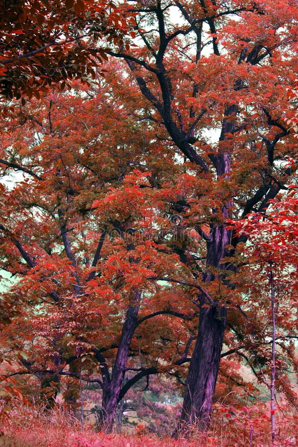 Download Old trees stock image. Image of foliage, good, pulchritude - 14913635