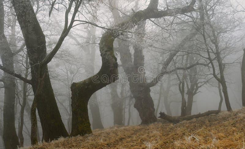 Download Old trees stock image. Image of moss, scene, landscape - 38264305