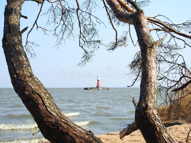 Beautiful lighthouse in Curonian spit, Lithuania. Old trees and lighthouse in Curonian spit  in spring royalty free stock photo