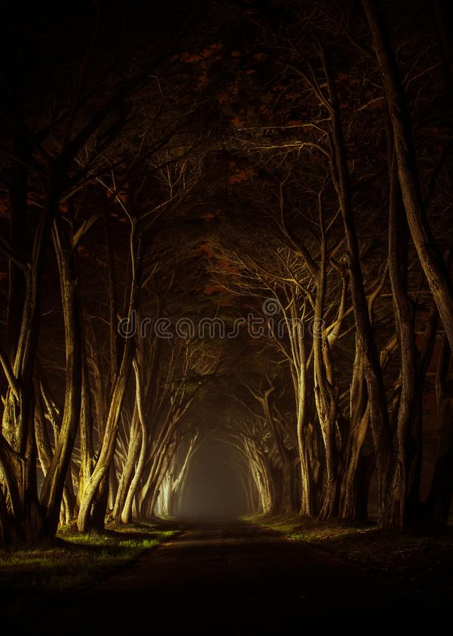 Free Old Trees Park Alley Stock Photos - 51806613