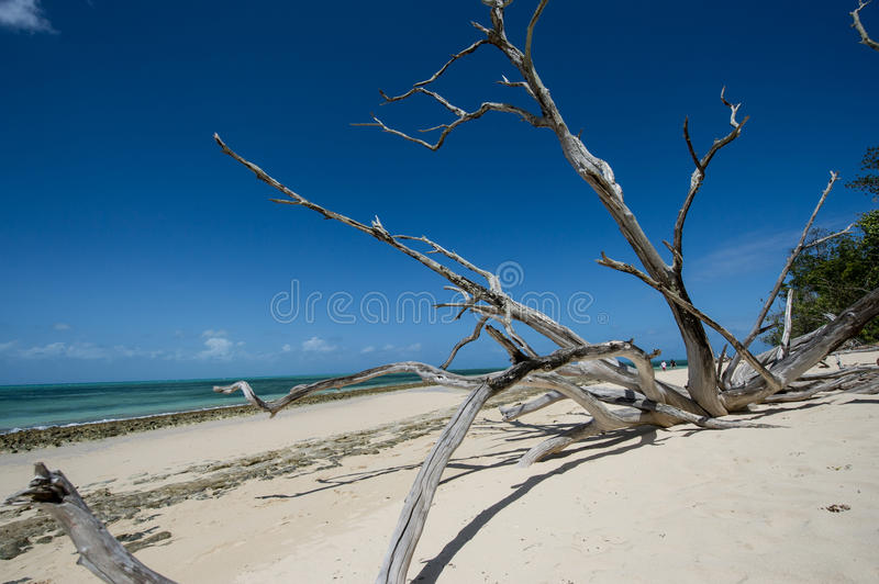 Download Old trees by the sea stock image. Image of tree, holidays - 29341479