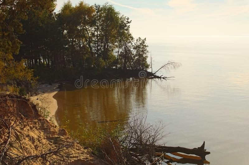 Old trees at yellow sand in hill near a river. Tree trunks lie in the water. Landscape with a blue sky in sunny autumn day stock image