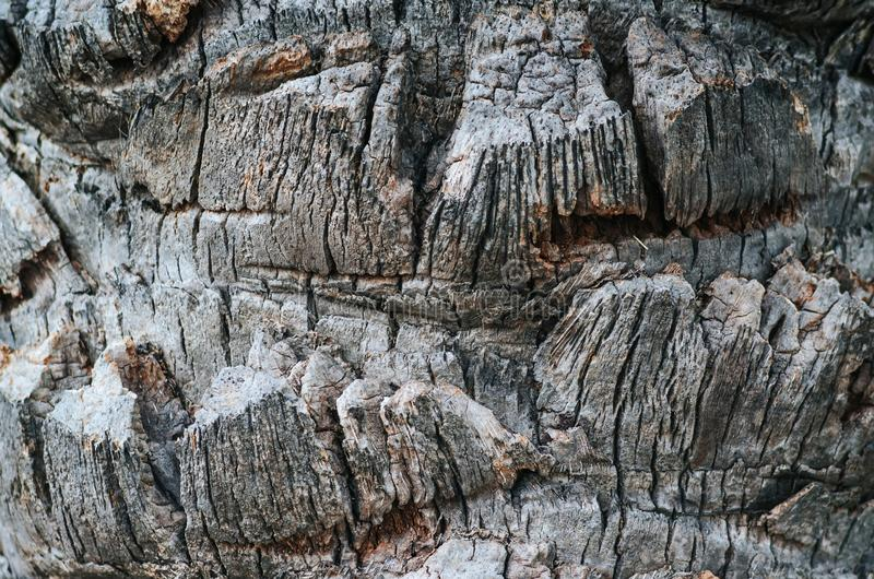 Old tropical palm tree bark weathered horizontal texture closeup royalty free stock images