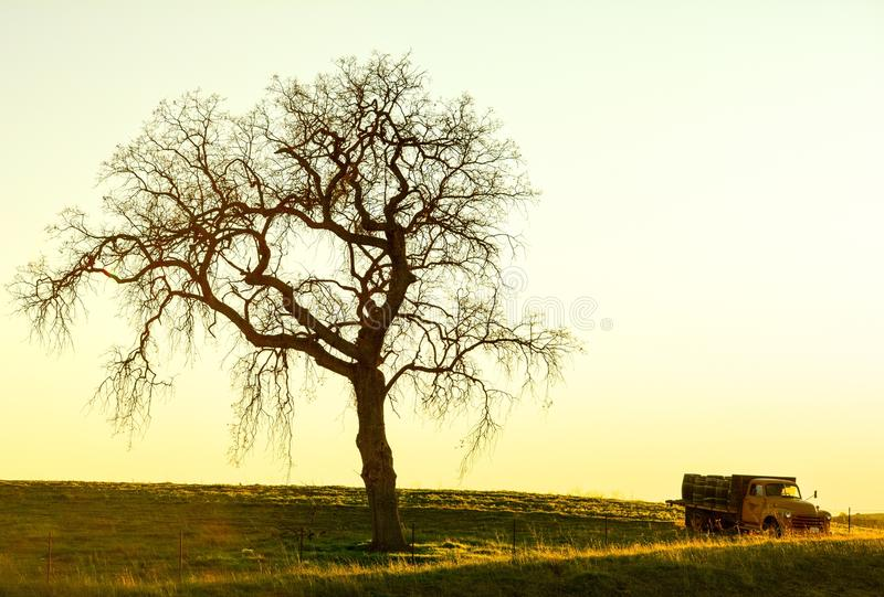 Old Truck and Oak at Sunset stock images